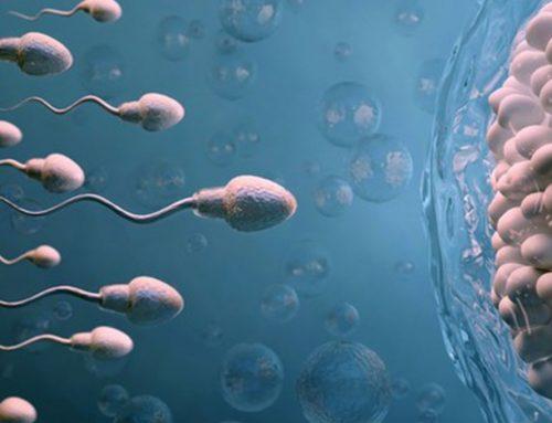 Factores que influyen en la calidad espermática